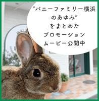 バニーファミリー横浜のあゆみをまとめたプロモーションムービー