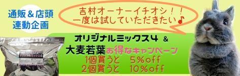 牧草 特別特価 アルコジャパン オリジナルミックス4 大麦若葉 牧草苦手 シニアうさぎ