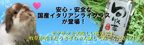 旬牧草 新商品