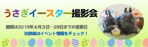 バニーファミリー横浜 うさぎ撮影会 バレンタイン 季節