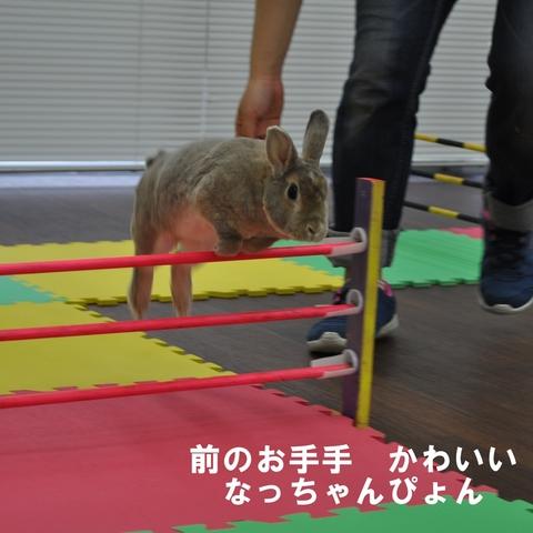 hopping118.JPG