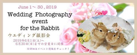 2019ウエディング撮影会.jpg