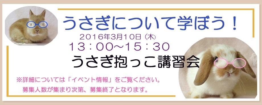 バニーファミリー横浜 うさぎ専門店/うさぎブリーダー/うさぎ用品通販/うさぎホテルトップ画像2