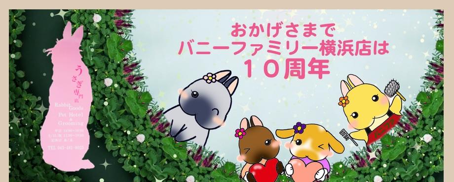 バニーファミリー横浜 うさぎ専門店/うさぎブリーダー/うさぎ用品通販/うさぎホテルトップ画像4