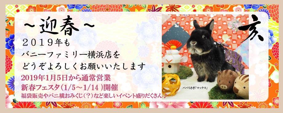 バニーファミリー横浜 うさぎ専門店/うさぎブリーダー/うさぎ用品通販/うさぎホテルトップ画像