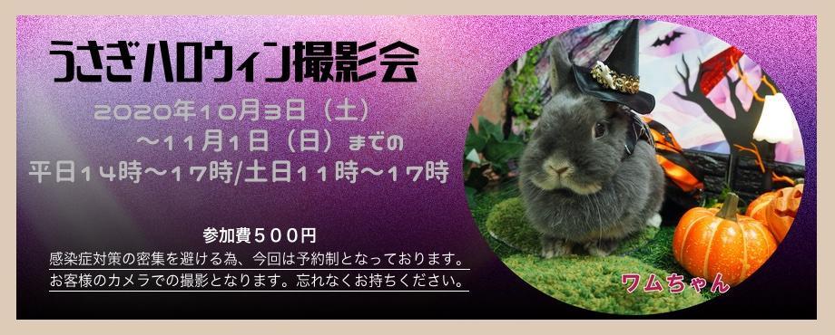 バニーファミリー横浜 うさぎ専門店/うさぎブリーダー/うさぎ用品通販/うさぎホテルトップ画像3