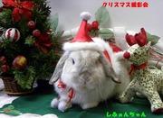 2009 クリスマス撮影会