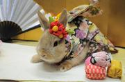 2010年(春)お着物撮影会