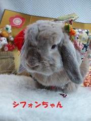 2010年(冬)お着物撮影会